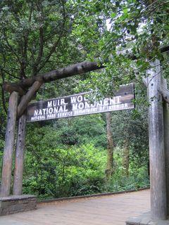 Muir Woods 001