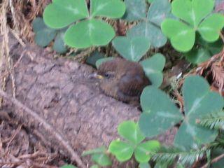 Muir Woods 004